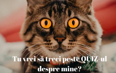 Quiz amuzant cu pisici